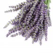 Lavender flowers — Stock Photo #5982785
