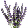 Lavender flowers — Stock Photo #5982790