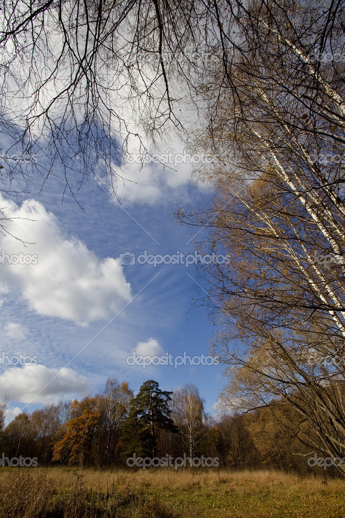 Autumn forest on a bright day — Stock Photo #6511253