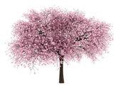 Surkörsbär träd isolerad på vit bakgrund — Stockfoto