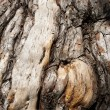 Tree bark — Stock Photo #6264218