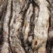 Tree bark — Stock Photo #6264301