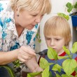 The grandson and grandmother Studying a plant — Stock Photo