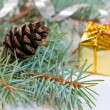 Stock Photo: Christmas branches with fir cone isolated on white background