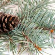 Christmas branches with fir cone isolated on white background - Stock Photo