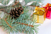 Christmas branches with fir cone isolated on white background — Stock Photo