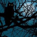 Owl In Night — Stock Vector