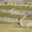 ruines de Machu picchu — Photo