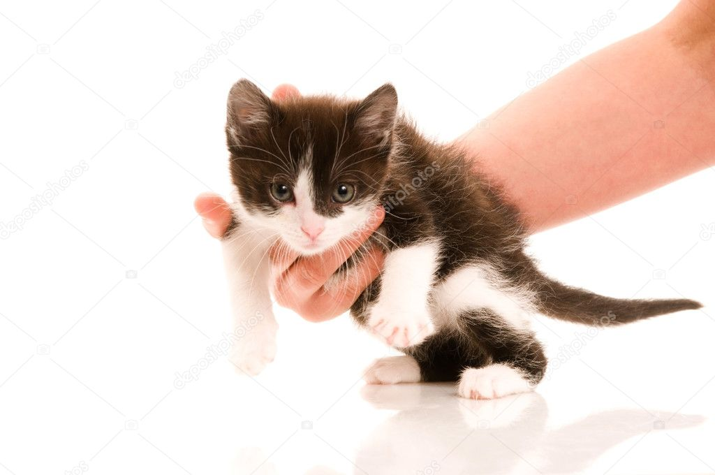 Adorable young cat in woman s hand — Stock Photo #5931548