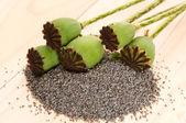 ケシの種子とポピーの頭 — ストック写真