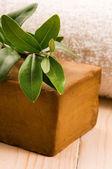 Přírodní olivové mýdlo s čerstvou větev — Stock fotografie