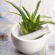 Aloe vera - herbal medicine — Stock Photo