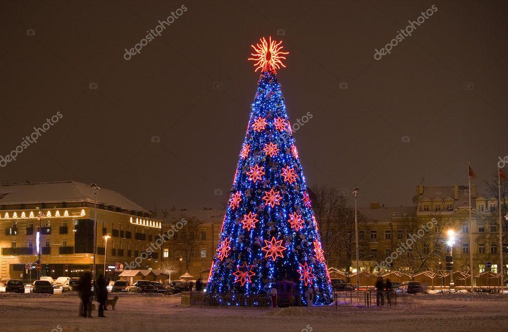 фото елки на горе