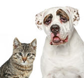 Kitten and strong dog — Stock Photo