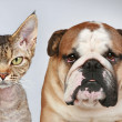 Cat and Dog — Stock Photo #5655949