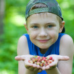 Little boy holding strawberries — Stock Photo