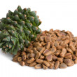 Stock Photo: Korepine cone and nuts