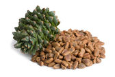Korean pine cone and nuts — Stock Photo
