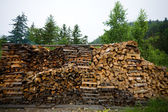 Wood harvested for the fire — Stock Photo