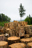 Wood sawn log — Stock Photo