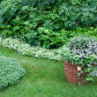 Stock Photo: Plants in garden planted in basket