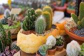 Flower pot with variety of succulents — Stock Photo