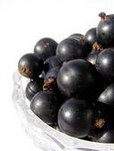 Bayas dulces grosella negra - negro sobre blanco — Foto de Stock