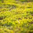 Grass in sunset light - Stock Photo