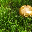 Moneybox on the grass — Stock Photo