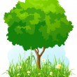 Stock Vector: Isolated green tree background