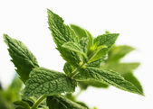Mentha piperita, mint — Stock Photo