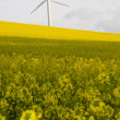 Windmill and rape field — Stock Photo #5487337