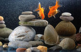 Couple goldfish — Stock Photo