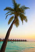 Palm tree over ocean in the light of the sunset sun — Stock Photo