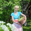 The young attractive woman with a basket of apples in a garden. — Stock Photo
