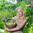 Attractive woman with a basket of apples in a garden — Stock Photo