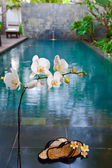 Branch of blooming orchid and slippers (out of focus) before pool — Stock Photo