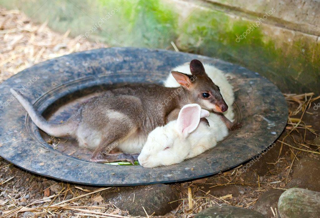 Kangaroo Birth  Worlds Weirdest  YouTube