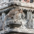 Royalty-Free Stock Photo: Bali,Indonesia. Monkey in temple.
