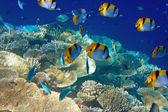 L'océan indien. monde sous-marin. — Photo