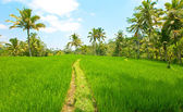 The tropical nature. Indonesia. Bali — Stock Photo