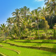 View on rice terraces, Bali, Indonesia - Stock Photo