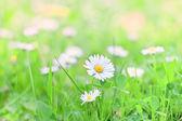 Spring flowers — Foto de Stock