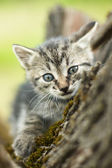 Curious little cute cat in a tree — Stock Photo
