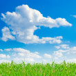 Clear blue sky background with green grass — Stock Photo