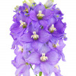 Violet vlower — Stock Photo