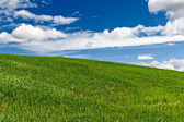 Green field with blue sky and clouds in the background — Stock Photo