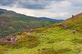 Precipice walk in Snowdonia, Wales — Stock Photo