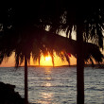 Stock Photo: Coconut palms and sand beach — Stock Photo