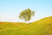 Tree in field — Stock Photo